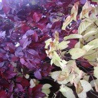 Осенние листья :: Анатолий