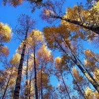 И вновь всесилен листопад... :: Лесо-Вед (Баранов)