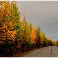дорога в осень. :: Лариса Красноперова