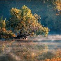 Утро туманное. Туман над водой :: Валерий Шейкин