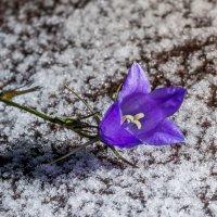 Зимой пахнет, а он не чует. :: Денис Антонов