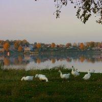 Осенний вечер :: Нэля Лысенко