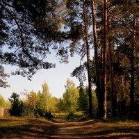 Лесная дорога :: Павел Зюзин