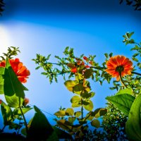 V MOYOM SADU :: eduard bagratuny