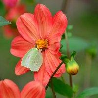 Цветок и бабочка :: Miola