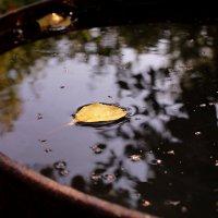 Осенний круиз :: Татьяна Ломтева