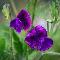 Цветы :: Наталия Егорова