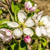 Муравьи тоже цветы опыляют :: Дмитрий Потапкин