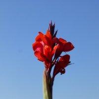 Цветы в конце сентября :: Наиля