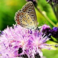 бабочка :: Ирина Стугина