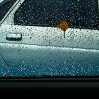 Дождливо. Осень... :: Владимир Буравкин