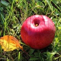 Плод Осени :: Mariya laimite