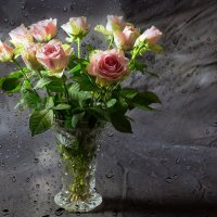 розы :: Irina Schumacher