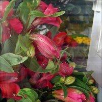 Альстромерии за стеклом :: Нина Корешкова