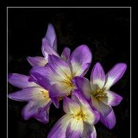 осенние цветы :: gribushko грибушко Николай