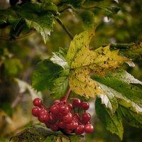 ягоды :: сергей агаев
