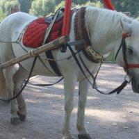Грустная лошадка :: Наталья Александрова