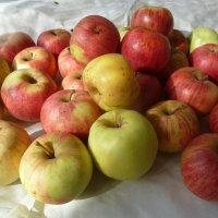 Осенние яблочки :: Валюша Черкасова