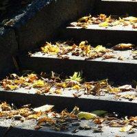 Лестница в осень... :: Владимир Секерко