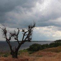 Живое и мёртвое или Подпирая небо :: Dr. Olver  ( ОлегЪ )