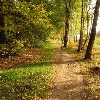 Теперь, точно, Золотая Осень IMG_1442 :: Андрей Лукьянов