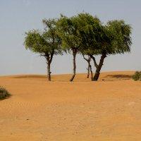 ОАЭ. Пустыня... :: Елена