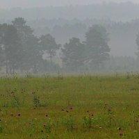В туманной дымке тает лес. :: nadyasilyuk Вознюк