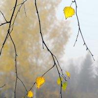 Осенняя грусть :: Валерий Талашов