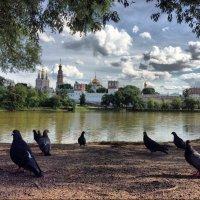 Новодевичий монастырь :: Андрей Григорьев