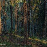 Луч света в вечернем лесу :: Борис Борисенко