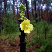 Осенний цветочек в лесу :: Татьяна Пальчикова
