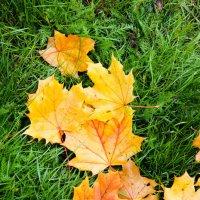 кленовые листья :: Юлия Паршакова