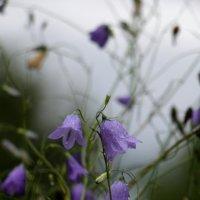 Музыка дождя :: veilins veilins