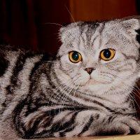 Кошка :: Андрей Головин