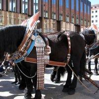 кони... :: Olga