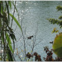 Серебряный пруд с утками... :: Тамара (st.tamara)