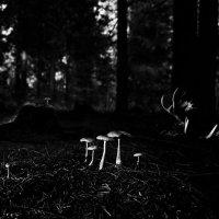 в темном лесу... :: Виталий Исаев