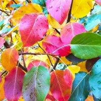 листья груши :: Владимир