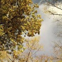 Ах, эта осень... :: Anna Chaton