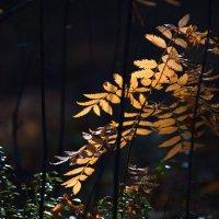Листья на солнце. :: Алексей Хаустов