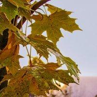 Осенние листья :: Владимир Воробьев