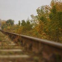 Осенний путь под другим углом :: sorovey Sol