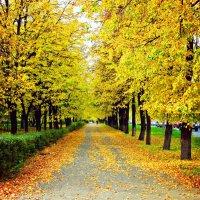 Неужели осень... :: Ася Крылова