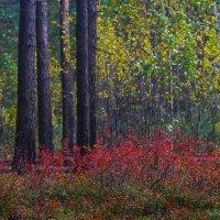 Осень в лесу :: Денис Матвеев
