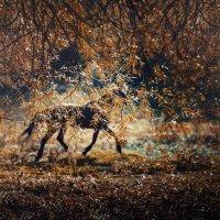 Осень... :: Сергей Пилтник
