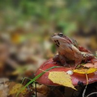 Очень грустная лягушка. :: Татьяна Глинская