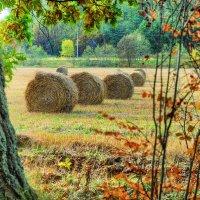 Осенние сборы :: Андрей Куприянов