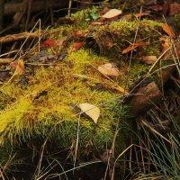осень в лесу :: sergej-smv