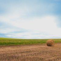 Суздальское поле :: Павел Даль