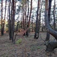 лес :: Дмитрий .